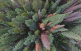Las nuevas maneras de ver el mundo gracias a los drones
