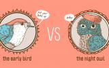 Early bird vs Night Owl: Consejos de Estudio